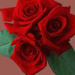 Заметка о любви и нежности к 8 марта
